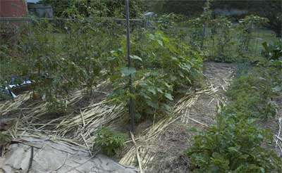 Garden with mulch